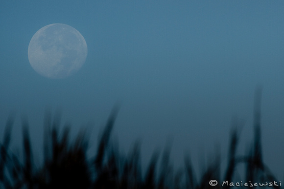 Harvest Moon setting over sea grass